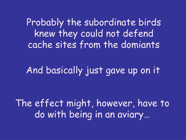 Probably the subordinate birds knew they could not defend cache sites from the domiants
