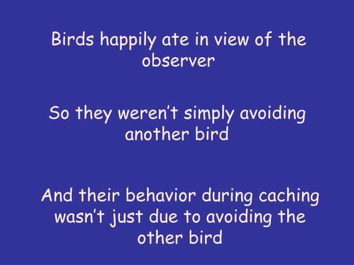 Birds happily ate in view of the observer
