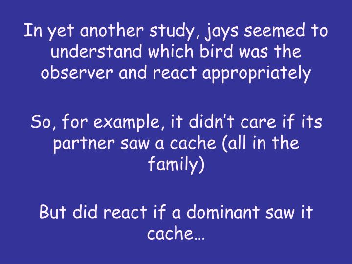 In yet another study, jays seemed to understand which bird was the observer and react appropriately