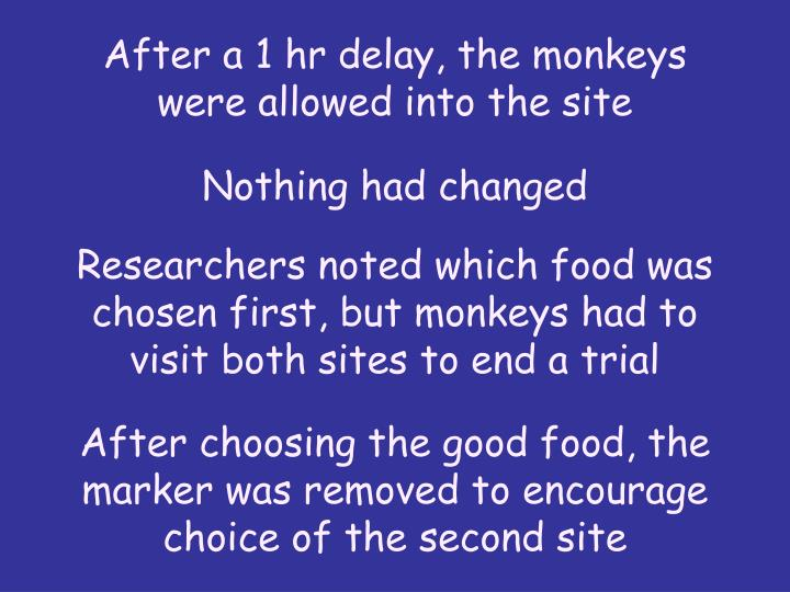 After a 1 hr delay, the monkeys were allowed into the site