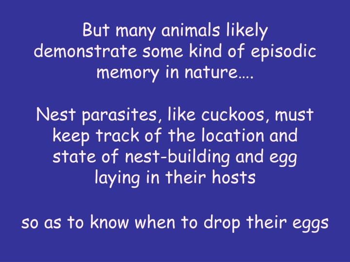 But many animals likely demonstrate some kind of episodic memory in nature.