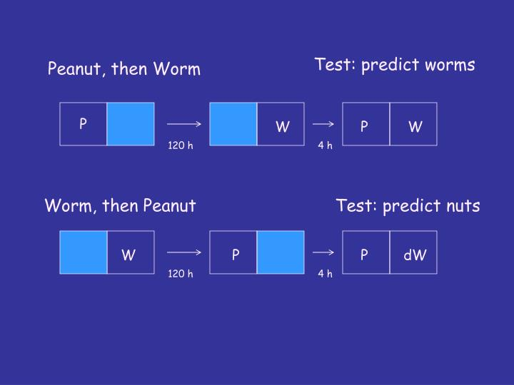 Test: predict worms