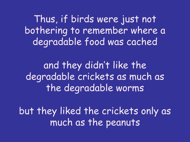 Thus, if birds were just not bothering to remember where a degradable food was cached