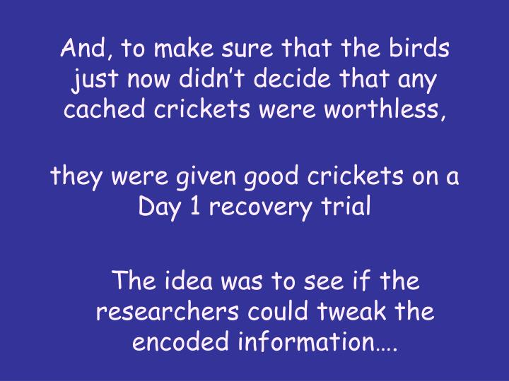 And, to make sure that the birds just now didnt decide that any cached crickets were worthless,