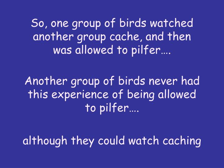 So, one group of birds watched another group cache, and then was allowed to pilfer.