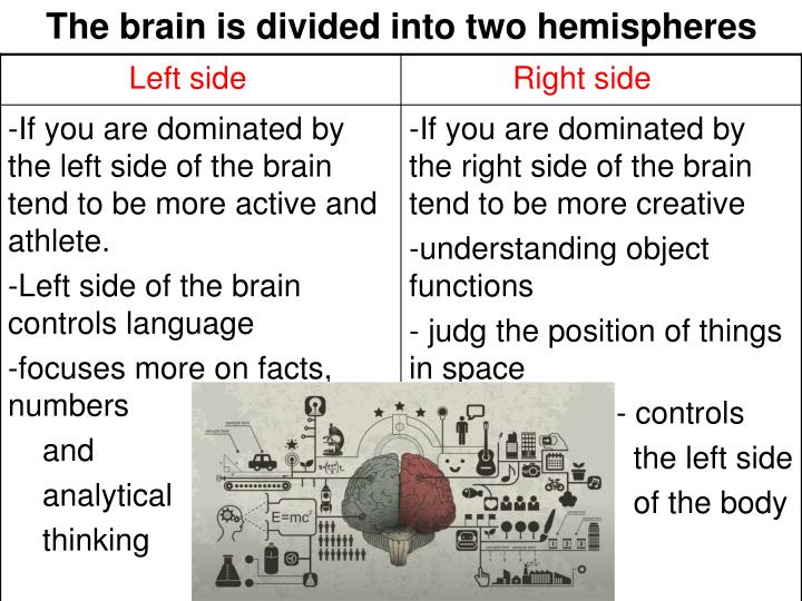 The brain is divided into two hemispheres