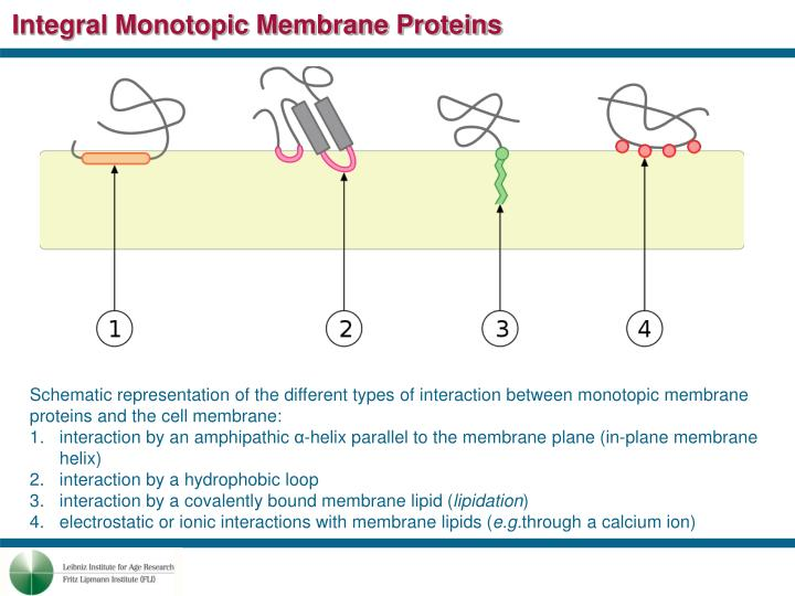 Integral Monotopic Membrane Proteins