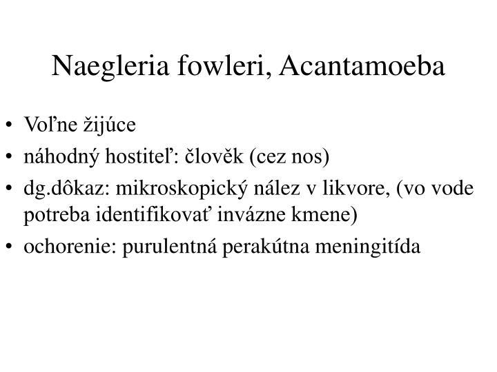 Naegleria fowleri, Acantamoeba