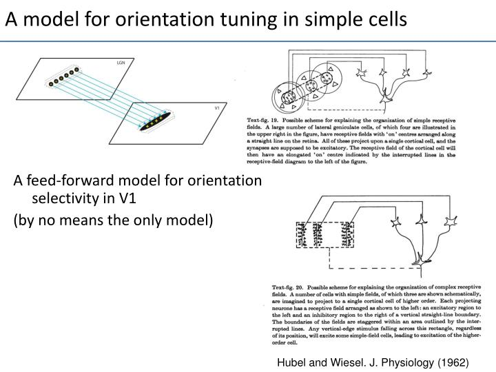 A model for orientation tuning in simple cells