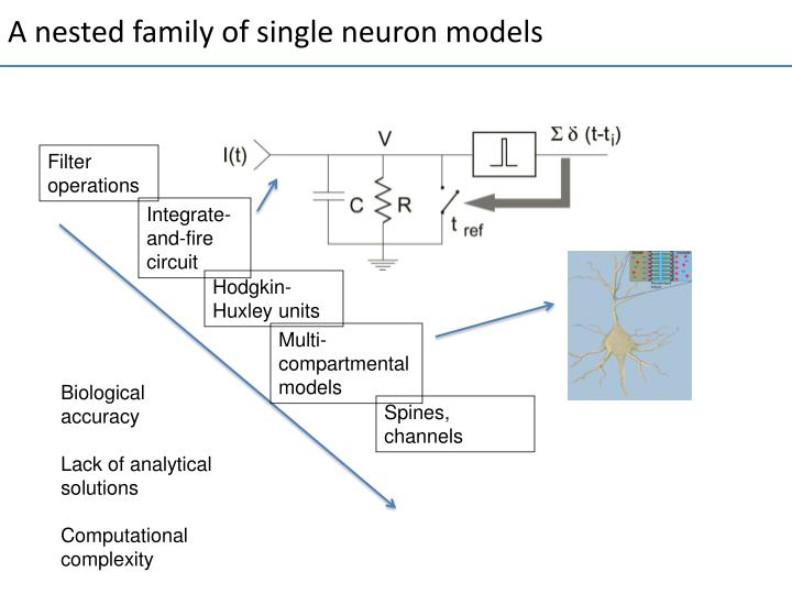 A nested family of single neuron models