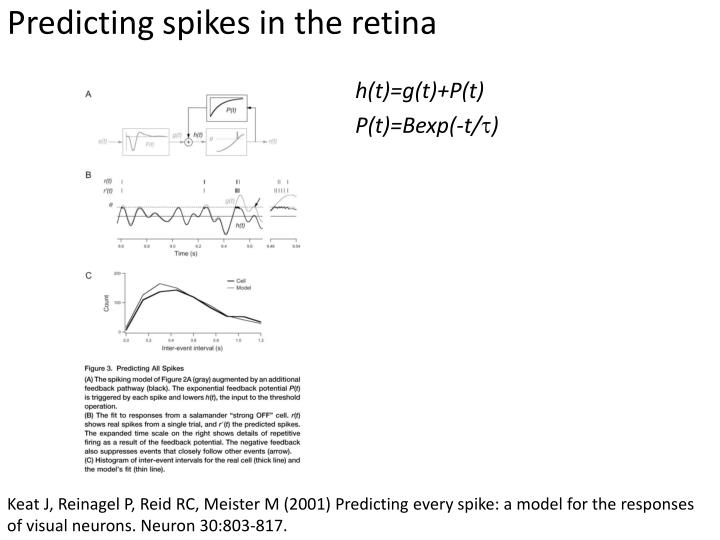 Predicting spikes in the retina