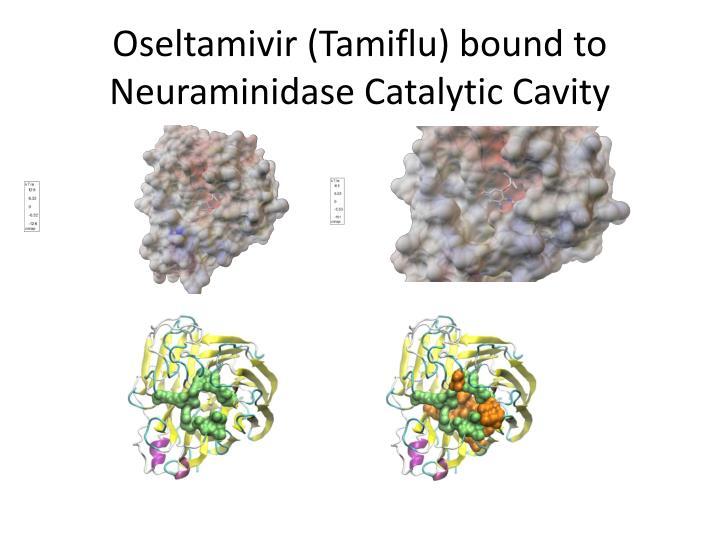 Oseltamivir (Tamiflu) bound to Neuraminidase Catalytic Cavity