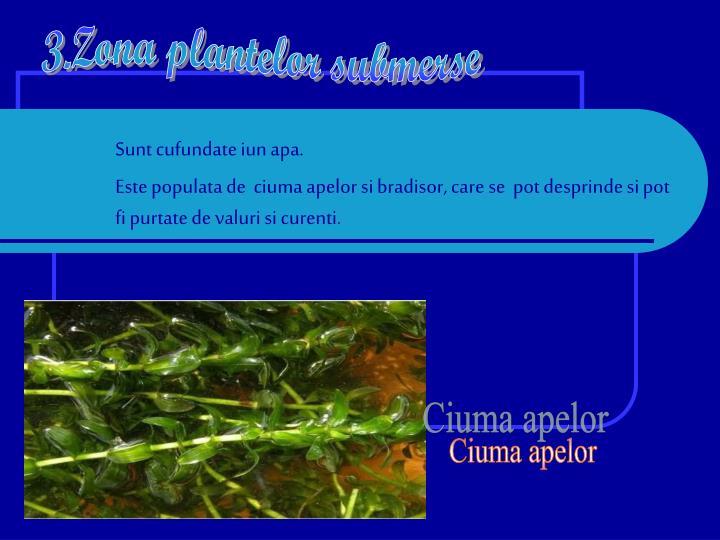 3.Zona plantelor submerse