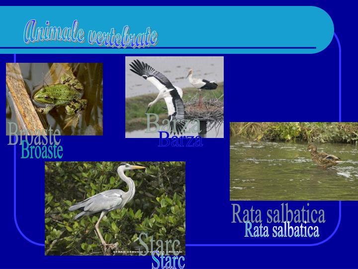 Animale vertebrate
