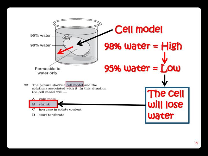 Cell model