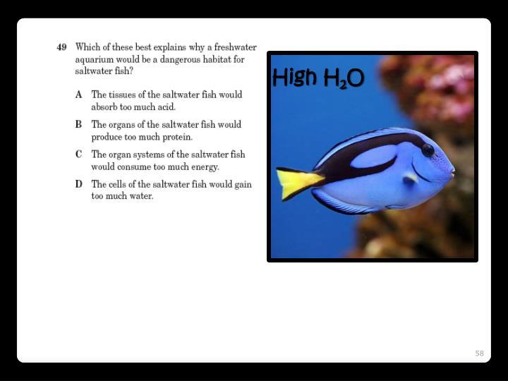 High H