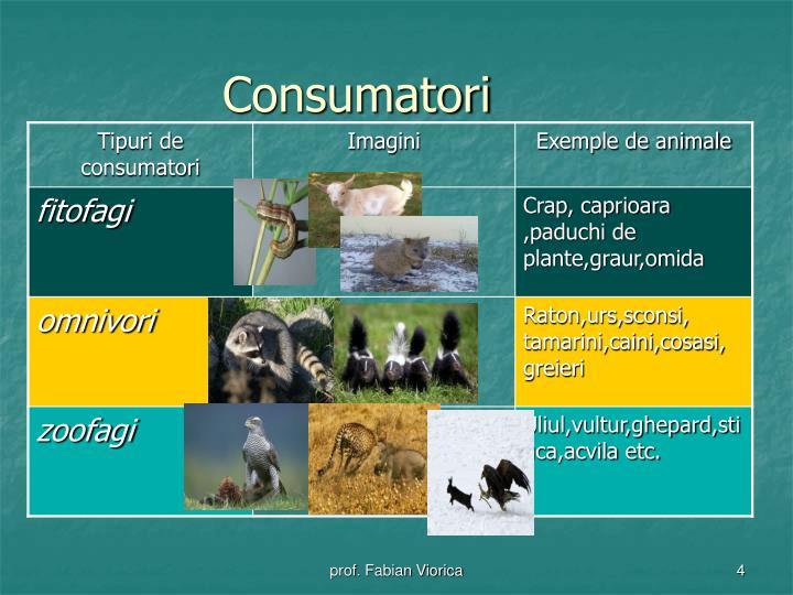 PPT - Relatii trofice in ecosisteme PowerPoint ...