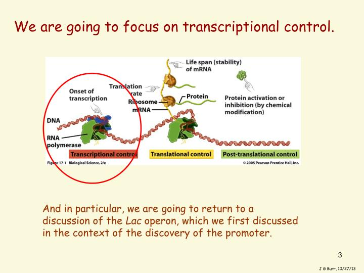 We are going to focus on transcriptional control