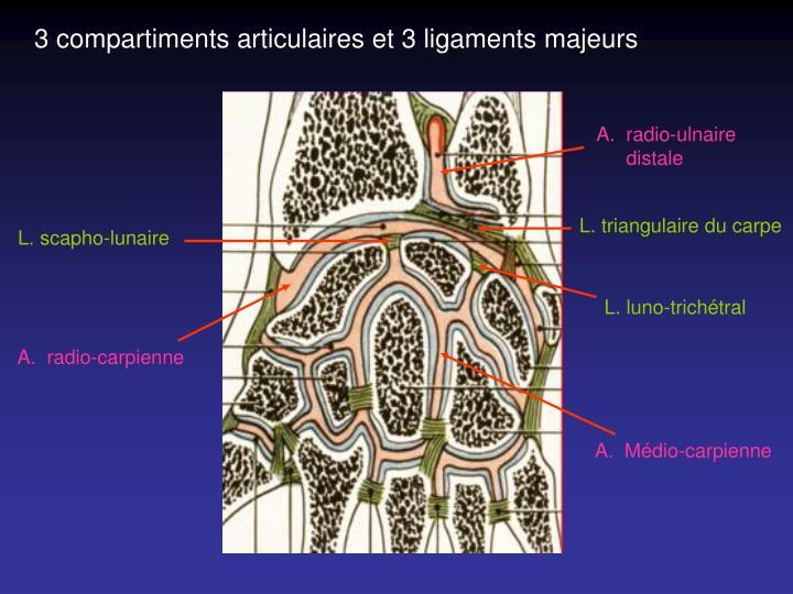 3 compartiments articulaires et 3 ligaments majeurs
