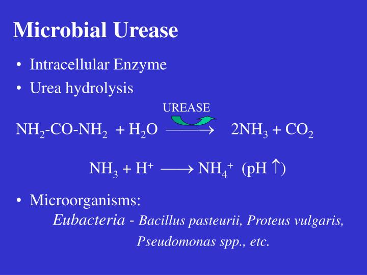 Microbial Urease