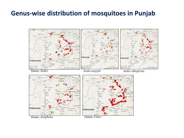 Genus-wise distribution of mosquitoes in Punjab