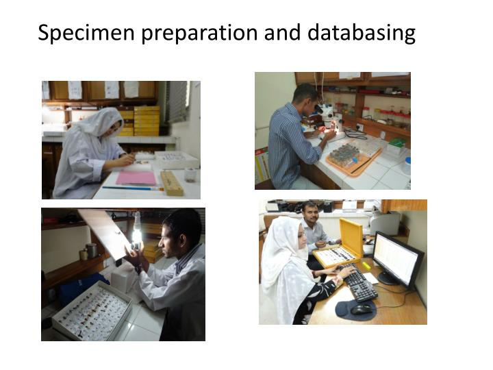 Specimen preparation and