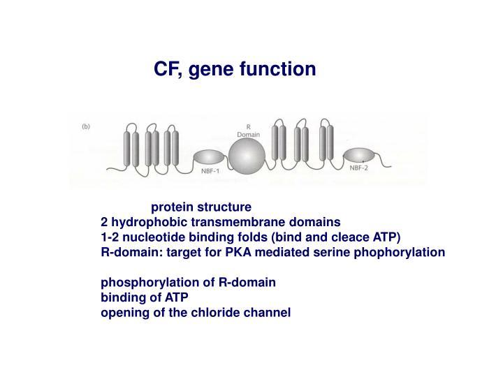 CF, gene function