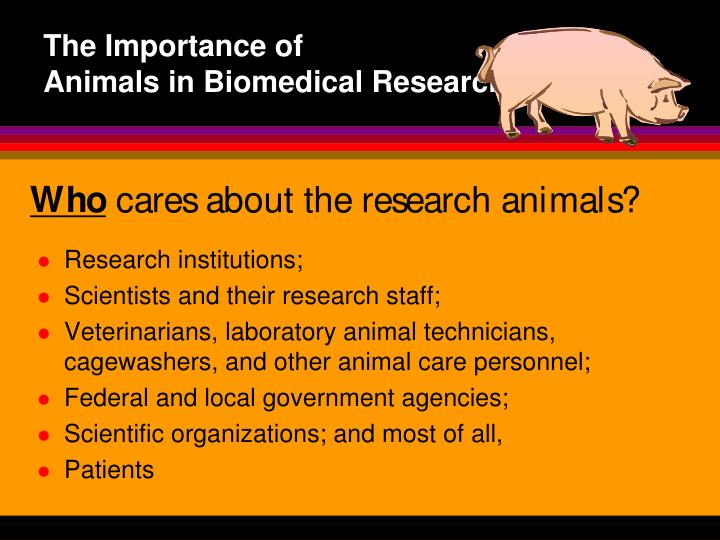 use of animals in biomedical research essay Essay animal experimentation introduction animal experimentation has been a part of biomedical and behavioral research for several millennia experiments with animals were conducted in greece over 2,000 years ago.