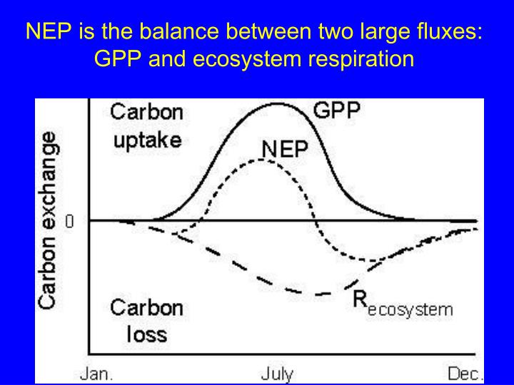 NEP is the balance between two large fluxes: