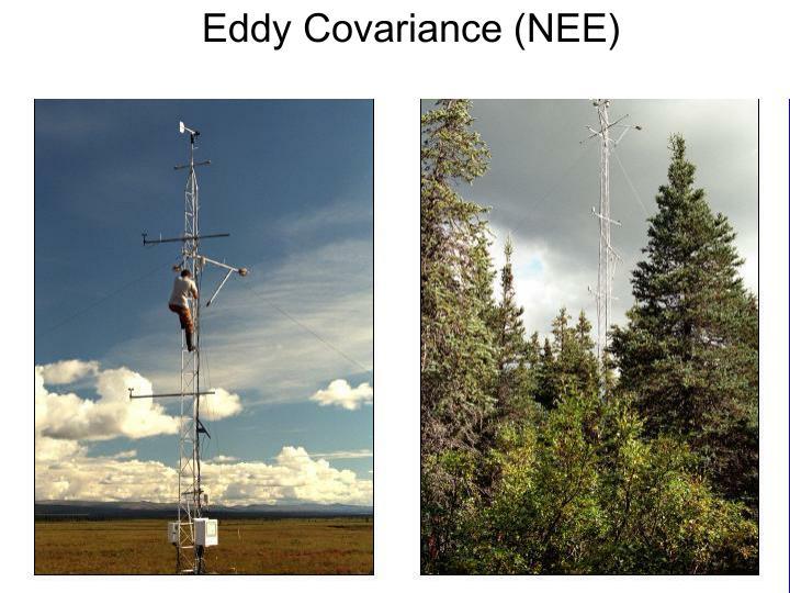 Eddy Covariance (NEE)