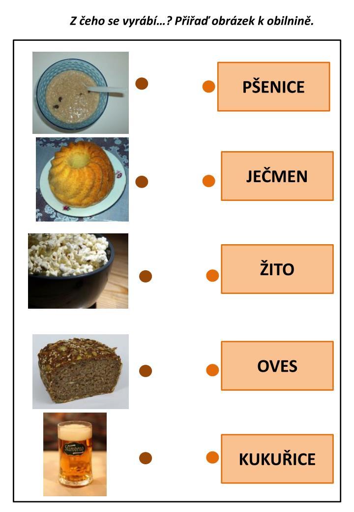 Z čeho se vyrábí…? Přiřaď obrázek k obilnině.