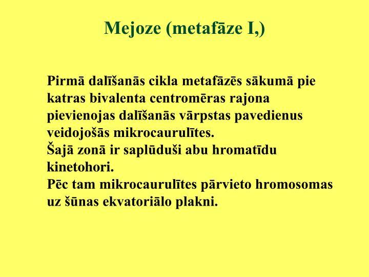 Mejoze (metafāze I,)