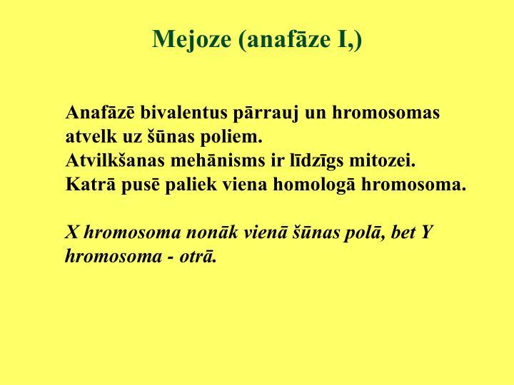 Mejoze (anafāze I,)