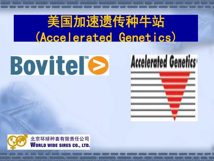 美国加速遗传种牛站