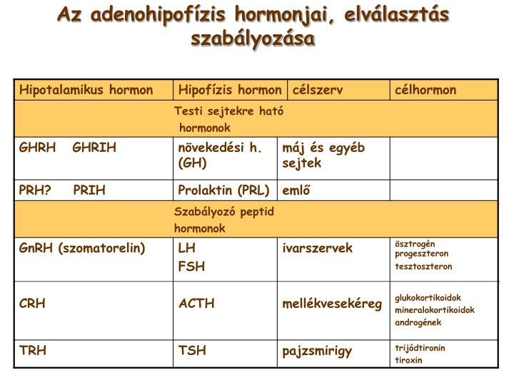 Az adenohipofízis hormonjai, elválasztás szabályozása