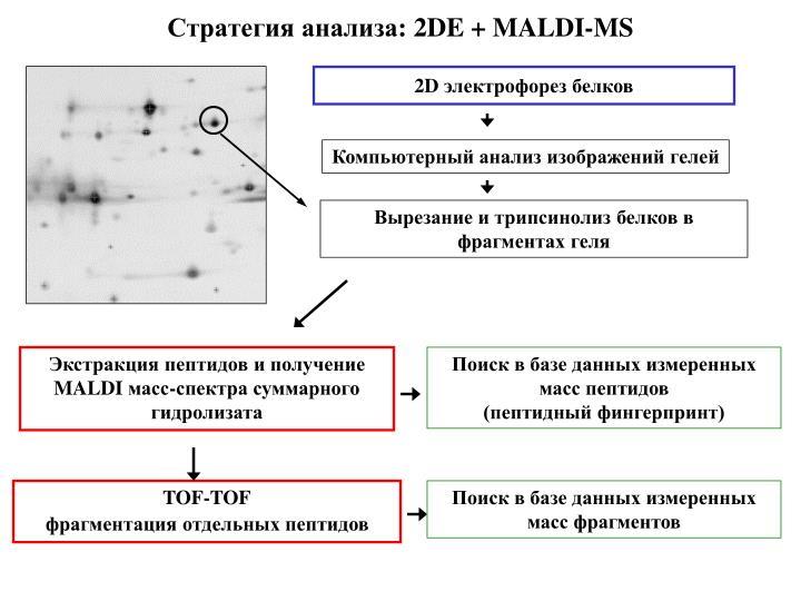 Стратегия анализа