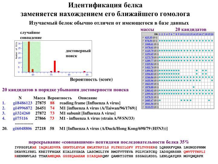 Идентификация белка