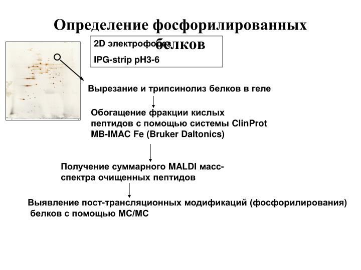 Определение фосфорилированных белков