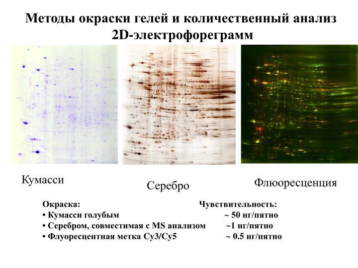 Методы окраски гелей и количественный анализ