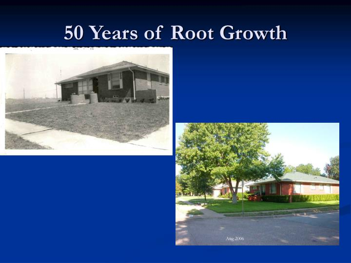 50 Years of Root Growth