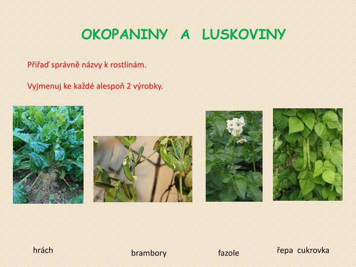 OKOPANINY  A  LUSKOVINY