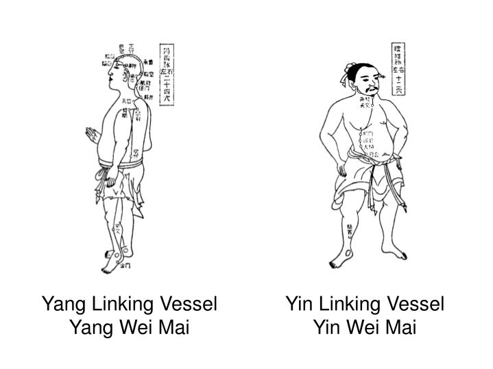Yang Linking Vessel
