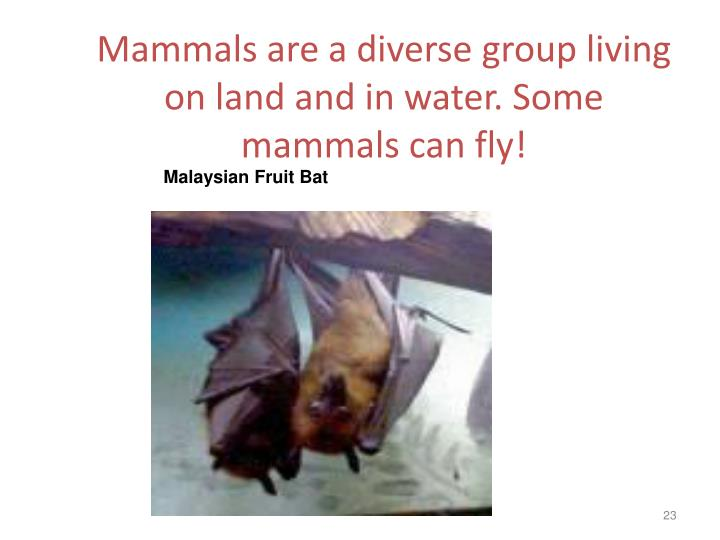 Mammals are a diverse group living on land and in water. Some mammals can fly!