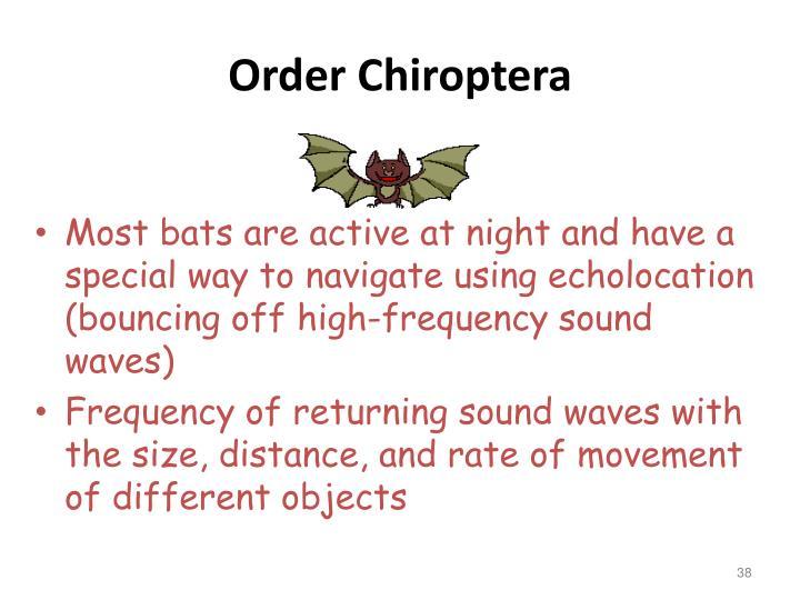 Order Chiroptera