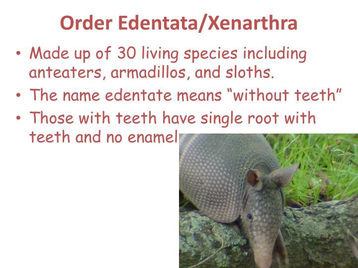 Order Edentata/Xenarthra