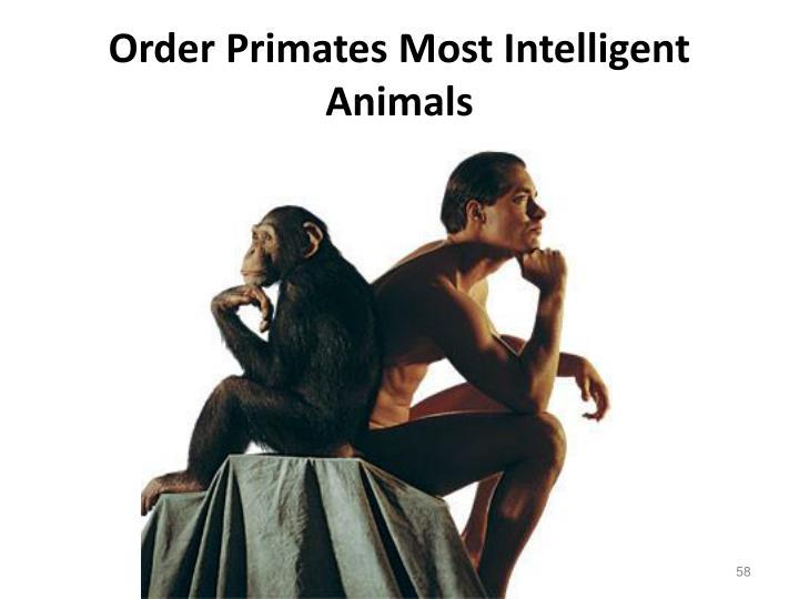 Order Primates Most Intelligent Animals