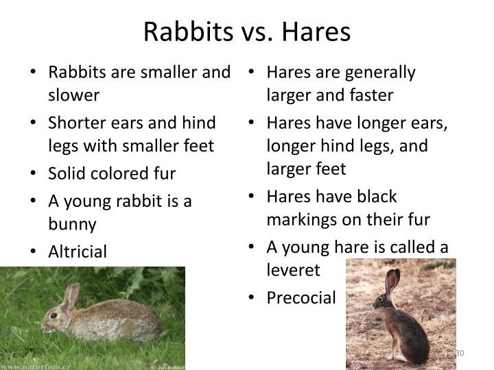 Rabbits vs. Hares