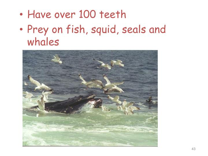 Have over 100 teeth