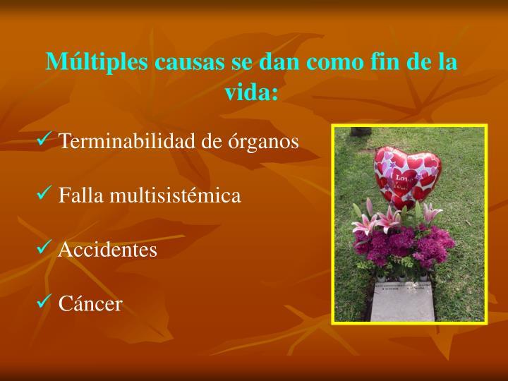 Múltiples causas se dan como fin de la vida: