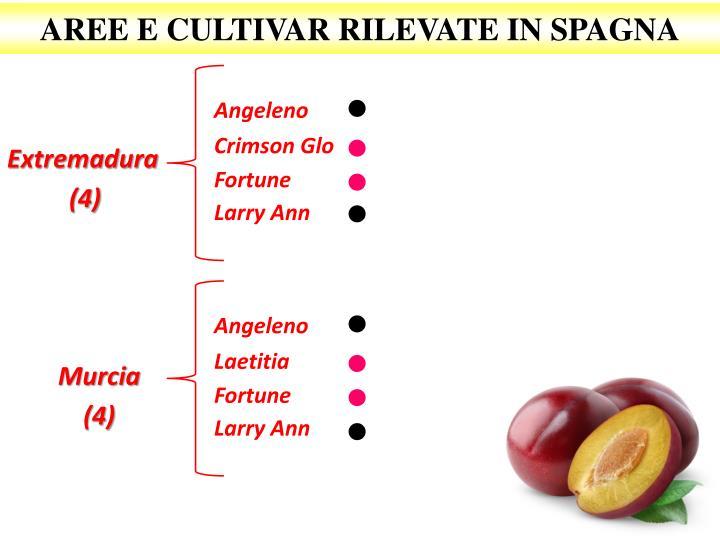 AREE E CULTIVAR RILEVATE IN SPAGNA